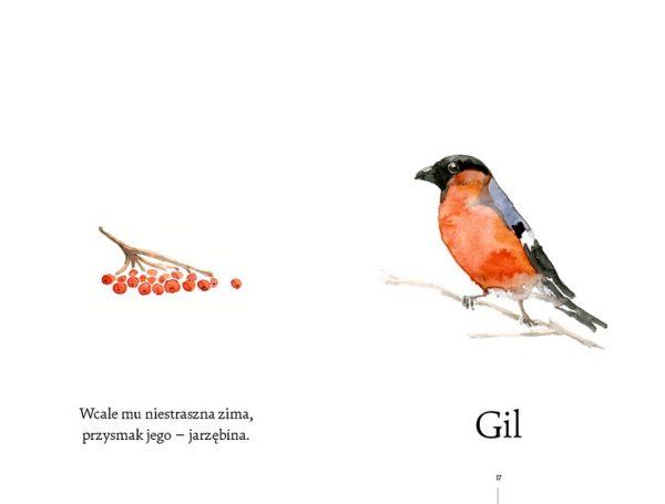Co za ptak robi tak? Gil